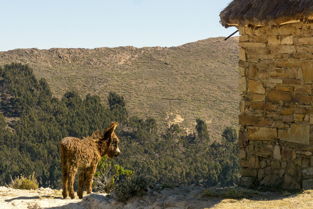 Loved this shaggy donkey we saw along our trek.