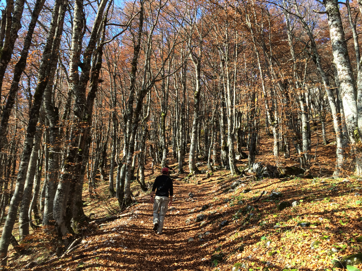 The trail through wooded trails of Durmitor